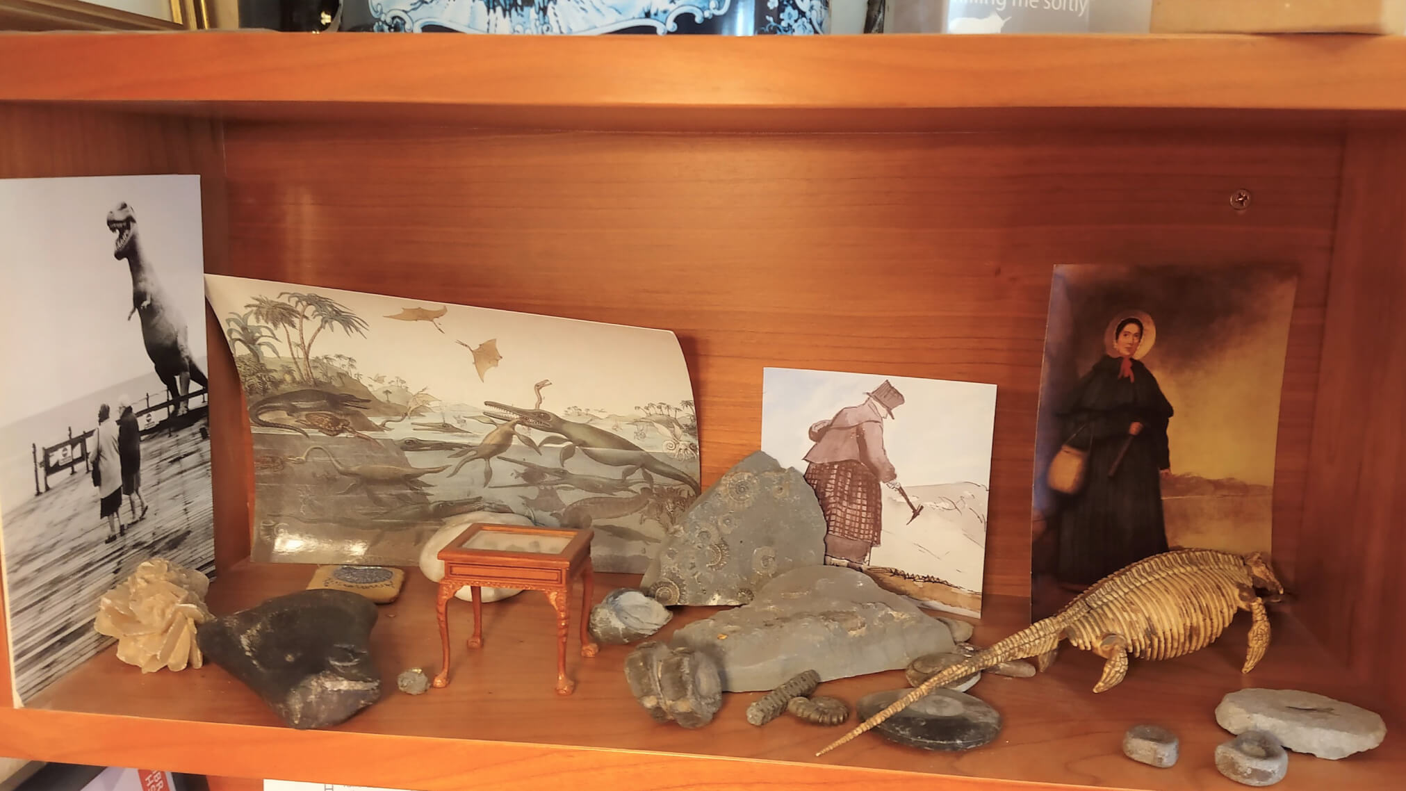Tracy Chevalier Studio - Remarkable Creatures Cubby Hole