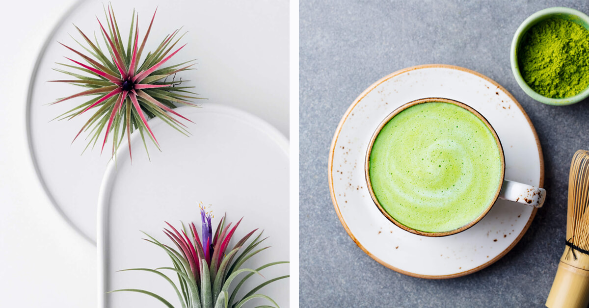 Ideal Lifestyle Vision Quiz - Aspirational Images - Air Plants and Matcha Latte