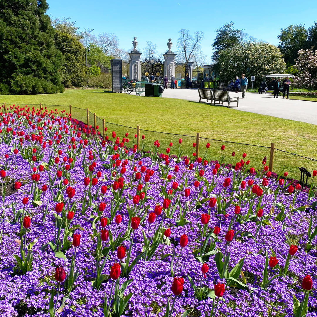 Gorgeous view of red and purple flowers in a green field at Kew Gardens