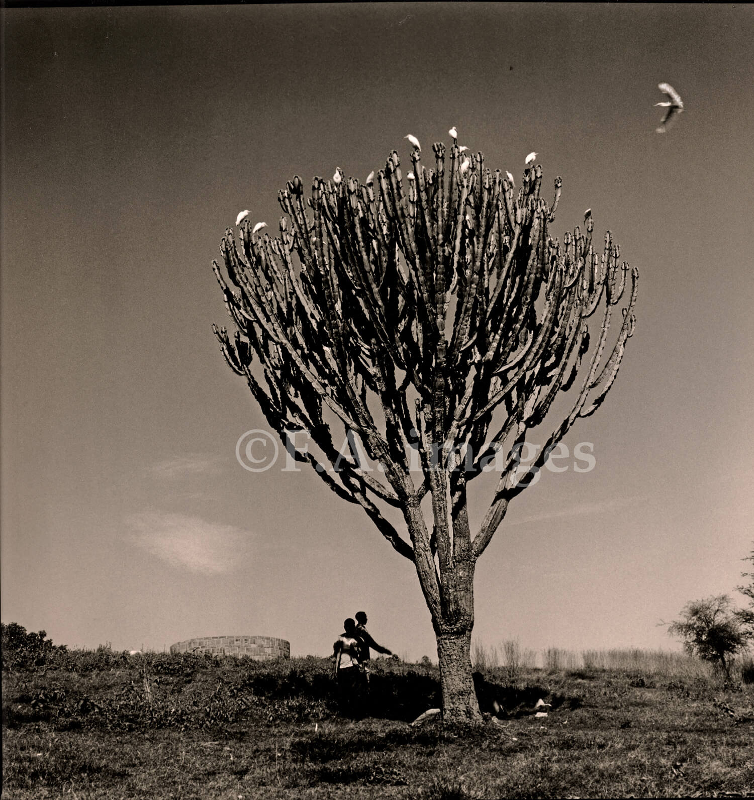 Fawn Anderson's last shot she took in Ethiopia when she thought she was done with photography. It's an atmospheric image of a tree with birds and outlines of people.
