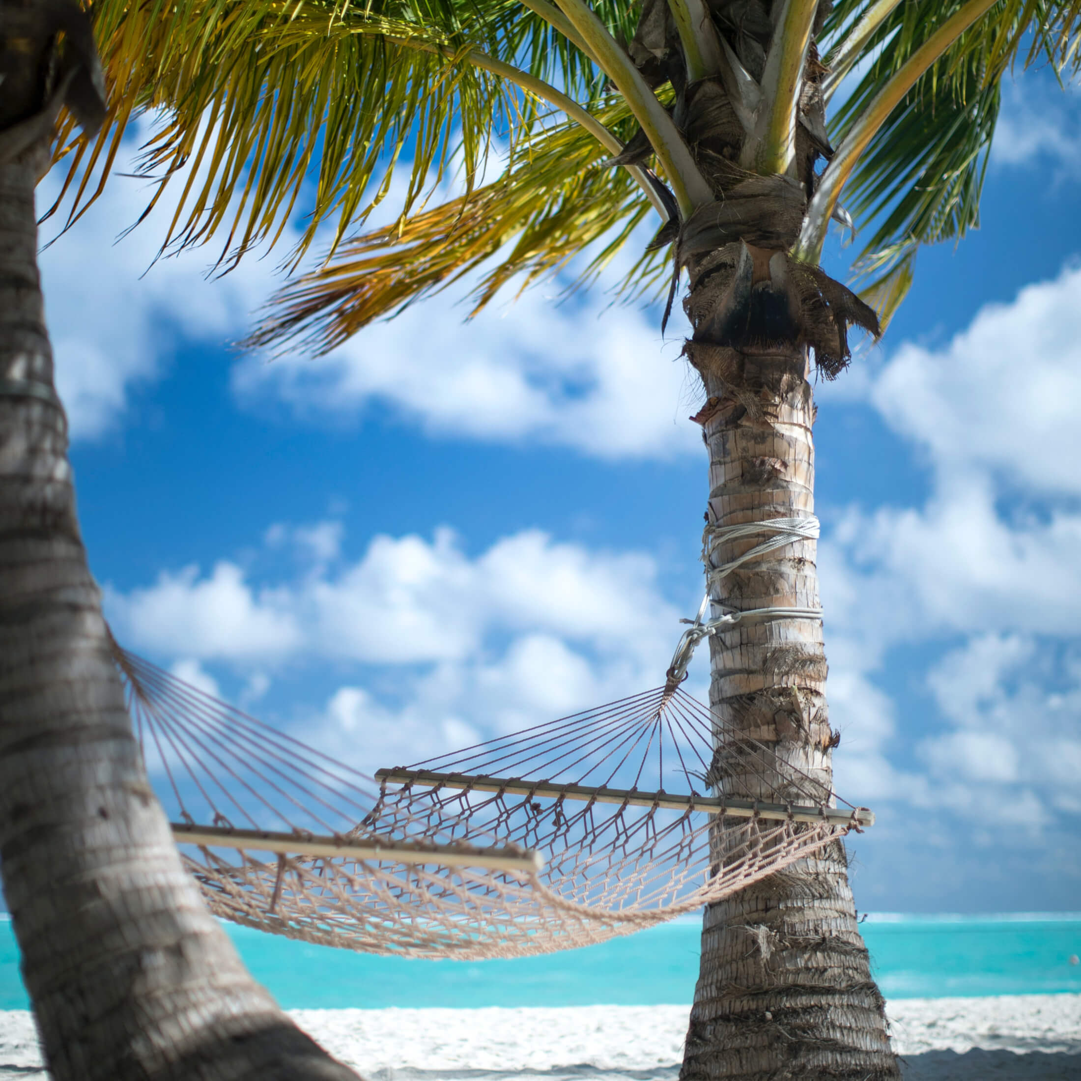 Photo of palms trees and hammock on a tropical beach by Mohamed Ajufaan on Unsplash